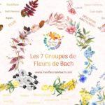 fleurs de Bach animaux