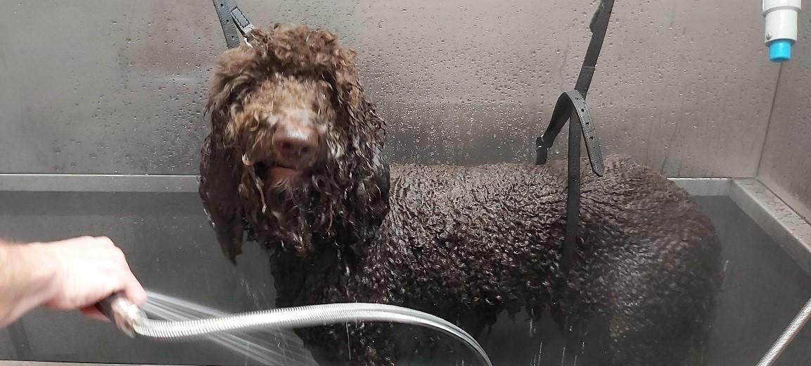 Dogwash soignies mons