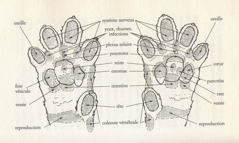 réflexologie faciale pattaire