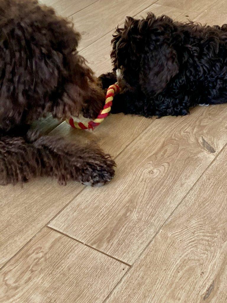 chiens jeux Jaucot Mons